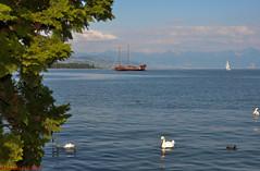 La Liberté sur le lac Léman (CH) (Annelise LE BIAN) Tags: animaux cygnes laliberté lacléman morges suisse bateaux lacs nuages oiseaux vaud ch nwn explore coth sunshine damn