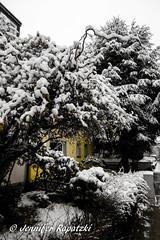 Schnee wir Puderzucker (Bernsteindrache7) Tags: water wasser winter white weather snow tree flora fauna frozen düsseldorf germany nrw panasonic lumix landscape