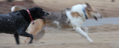like the wind (jak.conrad) Tags: lucy twizzler dog dogs rainbowbridge heartbroken rescue pups dogislove mutt