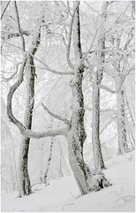 nieve3_024 (Ezcurdia) Tags: snow miguel de nieve nevada icy hielo pamplona aralar urbasa ibaeta san frozentrees artesiana lindux nieve aralar lanzurda pamplona