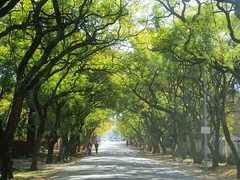 Strolling down the Avenue (Cathlon) Tags: road trees window avenue windscreen creativefilters takeaimchallenge