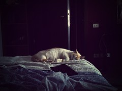 Are you dreaming? (ambcroft) Tags: sleeping cats animals dormire gatti animali filtro flickrandroidapp:filter=mammoth