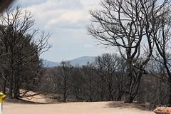 4636 Picnic area (wantadog) Tags: colorado fires royalgorge canoncitycolorado coloradolandscapes coloradofires