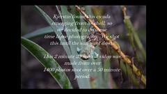 cicada-time-lapse-kj720p (BobMical) Tags: cicada timelapse emerge bobmical