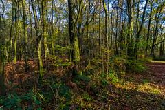 Lige: Walking in the Woods (Falcdragon) Tags: autumn light colour forest walking evening woods belgium liege lige