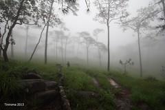 Phu Soi Dao , Uttaradit , Thailand.