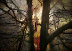 somewhere in the forest (Hal Halli) Tags: wood autumn trees light wild inspiration plant vortex abstract fall texture nature mystery forest landscape amber woods natural outdoor magic sunny mystic twop artdigital sharingart lovelymotherearth halhalli