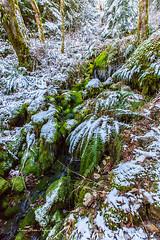 Frozen Teneriffe Creek (KPortin) Tags: creek moss boulders ferns icicles teneriffecreek