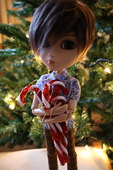 """""""Just so you know, all of these are mine."""" (Part II) (Starlight, Starbright) Tags: decorations teddy stripes christmastree sparkle candycane redandwhite taeyang ochristmastree"""