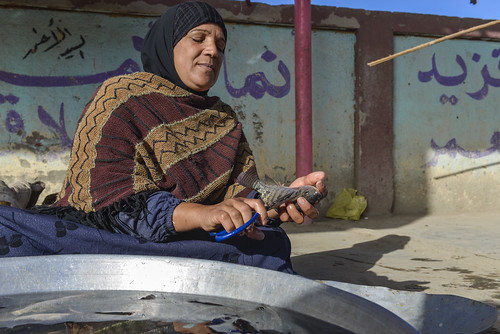 A woman cleans a fish for sale in Fayoum, Egypt. Photo by Heba Al Begawi/WorldFish, 2014.