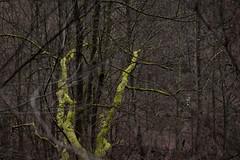 Little green man (Herr Olsen) Tags: äste wald moos solingen mensch tarnung müngsten wupper warnweste