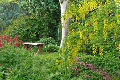 El jardn... Un da ms me quedar sentada aqu en la penumbra de un jardn tan extrao. ... (bego vega) Tags: madrid plantas banco jardin rbol vega seco bego laburnum olmo