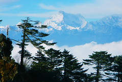 Sandakphu, Darjeeling, West bengal, India (Sougata2013) Tags: india mountain nature landscape hill himalaya darjeeling hilltop westbengal sandakphu himalayanrange pandim kabru kumbhakarna kanchenjungarange mightykanchenjunga