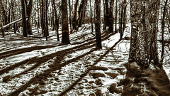 Guardians of the Trail (Wes Iversen) Tags: trees winter sun snow nature eyes woods sha