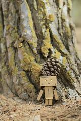 part of nature (Alice Luk.) Tags: tree cute nature forest canon actionfigure 50mm cool amazon box mini kawaii figure danbo 600d danboard danbomini