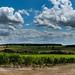 Pays du cognac - Grande champagne - Verrières - Charente (16)