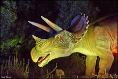 Triceratops 9019 (Zachi Evenor) Tags: israel dinosaur jerusalem botanicgarden  botanicalgarden  dinosaurs animatronics triceratops 2015 jerusale dinosauria givatram  ceratopsia  ceratopsidae  zachievenor   triceratopses