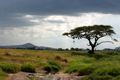 Serengetti landscape (rreyn92) Tags: africa mountain storm tree classic water river landscape tanzania day background hill distance grassland stormysky nests serengetti africanlandscape rakn