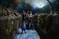 Liam, Isaac, Julia leaving the shark tank at Sydney Aquarium (avlxyz) Tags: aquarium sydney australia sydneyaquarium fb5