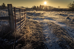 frost gate (Christian Collins) Tags: winter march cold frost heavyfrost thickfrost michigan midmichigan canoneos5dmarkiv backlit backlight weeds sun sunrise amanecer snow nieve ice gate fence wire