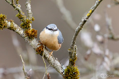 Kleiber 5 (rgr_944) Tags: vögel vogel bird oiseau tiere animaux animals natur outdoor canoneos80deos7dmk2 rgr944