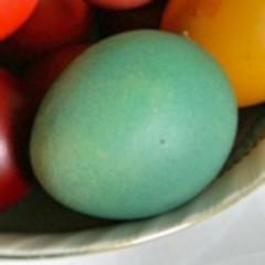 Found the green egg, now where's the ham? - Egg - Macro Mondays (Margarets Photos) Tags: easter egg macromondays