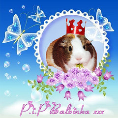 Tribute to Balbinka ~ from Alyson (pyza*) Tags: beautiful angel guinea guineapig cavy alyson pip tribute piggie balbi balbinka shiva69 winkamorksa