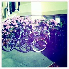 Student Bikes, Chapman University  June 6, 2013 (mrbosslady) Tags: flowers bike bicycle chapmanuniversity oldtownorange