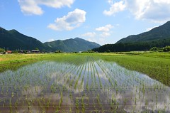 Japanese Rice (Hyogoman) Tags: travel blue summer mountain reflection green japan nikon asia rice farm tokina    11mm   hyogo      d7000
