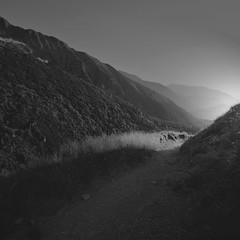 The light travels straight (Weisimel) Tags: trees light sunset sun mountains nature blackwhite nikon path valley slovakia ta gry tatry tatras tatra d800 bielskie distagont3518 carlzeissdistagon18mmf35tzf
