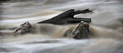 Avon River (William Greenfield) Tags: water rock stone river flow log avon avonriver