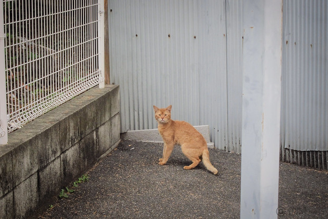 Today's Cat@2013-07-23