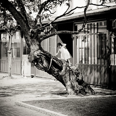 The girl on the tree (Ma Poupoule) Tags: paris nb noirblanc blackwhite children enfant enfants arbre tree mapoule people jesuscmsfavoritesgallery