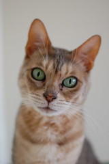 Cats and Dawgs... (heatherfyfe.fotos) Tags: pet cats pets tongue cat eyes ears whiskers stray juno scratching scratcher petportrait catseyes