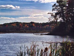 Sage Lake (Clair Photo) Tags: trees lake fall michigan upnorth iphone iphonography lewistonmi originalfilter uploaded:by=flickrmobile flickriosapp:filter=original