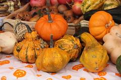 Jack be little (Chiara Chiarachiara) Tags: autunno zucche verdura piovedisacco