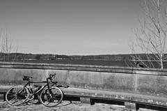 duck and bike (greatkithain) Tags: bw berlin byn flickr pentax bn alemania marzo 2013 dzoom flickrstars flickraward bestofbw flickrestrellas pentaxart naturpixel mygearandme ringexcellence pentaxawards k5pentaxians