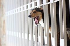 (anagiao) Tags: dog felicidade cachorro janela bocejo