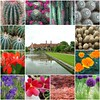 The RHS at Wisley - Beauty That Crosses All Borders! (antonychammond) Tags: flowers fountain leaves collage garden pond mosaic lawn borders wisley rhs royalhorticulturalsociety faunayfloradelmundo secretenchantedgardens vpu1 vpu2