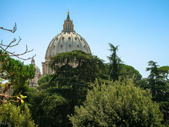 The dome of St. Peter's cathedral (Tiigra) Tags: 2007 italy rome vatican architecture church city dome garden tree lazio