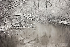 Frosted (Jenny Onsager) Tags: winter snow cold frozen stream snowcoveredtrees cain mygearandme mygearandmepremium mygearandmebronze mygearandmesilver mygearandmegold mygearandmeplatinum mygearandmediamond jennyonsager