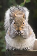 Squirrel (Mr.KPG) Tags: test lens sony f45 300mm 16 om setting zuiko trial aps sensor a7r 300mm420mm