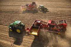 Grimme Potato Harvest 2013 (Grimme Group) Tags: se farming landwirtschaft harvest potato agriculture johndeere kartoffel ernte oogst grimme kartoffelernte potatoharvest se150