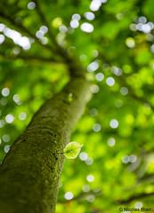 Unique (Nicolas Blain) Tags: wood france tree forest photo arbre fort bois reforestation nicolasblain