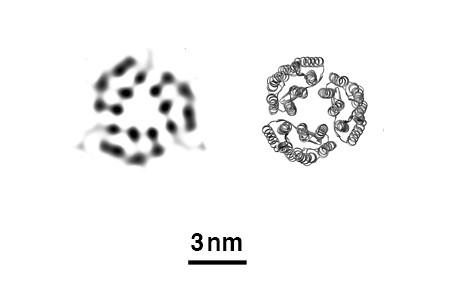 XFEL: Bacteriorhodopsin Proteins