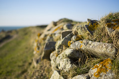 Chemin Côtier (Peter H. Photographie) Tags: sea mer france landscape bokeh sony bretagne paysage finistère argenton landunvez a580 sonydt35mmf18sam