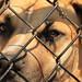 Innocent but jailed dog