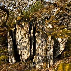 splits (prajpix) Tags: wood trees nature forest woodland landscape moss woods rocks lichen