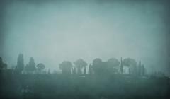 DSCN6561 here comes the rain again (pinktigger) Tags: trees italy mist rain fog italia hill friuli fagagna feagne
