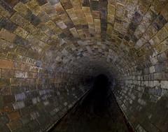 Carrot Bricks (darkday.) Tags: brick water pipe australia brisbane drain urbanexploration carrot qld queensland milf stormdrain urbex brickdrain
